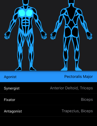 Muscle Diagram